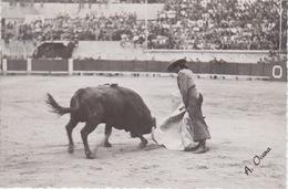 """CATOLINA FOTOGRAFICA - """"TOROS Y TOREROS"""" - CONCHITA CINTRON - 26-9-1948 - 26-JUGNO 1949 - FOTOGRAFIA  A. OCANA - Corrida"""