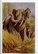 C 19282   -   Elephant  -  Illustrateur George Rankin - Elephants