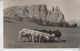 BOLZANO ALPE DI SIUSI LO SCILIAR 1955 - Bolzano