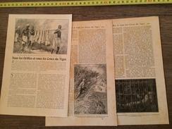 ENV 1900 SOUS LES GRIFFES ET LES CROCS DU TIGRE EN INDE - Collections