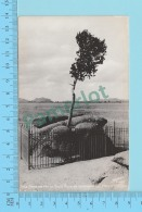 Carte Photo - Tree Growing Out Of Solid Rock, Sherman Hill, Photo From  Sanborn 1939-50 - 2 Scans - Photographie
