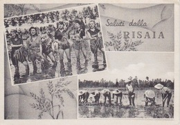 """CARTOLINA -""""SALUTI DALLA RISAIA""""-DUE VEDUTINE-SILVANA MANGANO DAL FILM """"RISO AMARO""""-SPEDITA DA FONTANETTO PO (VERCELLI) - Postkaarten"""