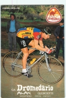 Cesare CIPOLLINI . 2 Scans. Cyclisme. Dromedario - Radsport