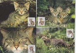 SLOVAKIA 2003 WWF Maxi Cards With Wild Cats LOCAL ISSUE - W.W.F.