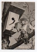 MECKI - Mecki Der Tierfreund - Viaggiata Nel 1960 - (FDC3156) - Cartolina Nr. 39 - Mecki