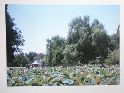 Postcard Adelaide Botanic Garden Nelumbo Pond South Australia My Ref B2210 - Adelaide