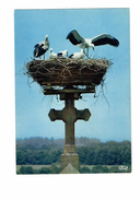 Cpm - Nid De Cigognes à Muttersholtz - 67 - Croix - Oiseaux