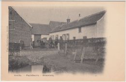 28169g   BROUWERIJ - PACHTHOEVE - BRASSERIE - Assche - 1905