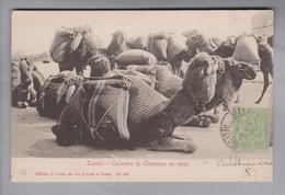 AK Afrika Tunesien 1904-11-04 Bizerte Foto Camel Caravane #246 P. Louit - Tunisie