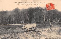 ¤¤  -  1175   -  LE GAVRE  -  Sur La Lisière De La Forêt Du Gavre  -  Attelage De Boeufs - Agriculture , Agriculteur - Le Gavre