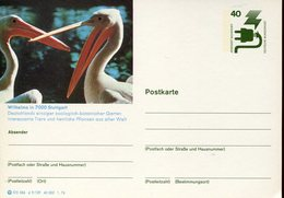 17938 Germany, Stationery Card 1976 Showing 2 Pelicans, Pelikane,