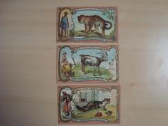"""Lot De 3 Chromos Chicorée """"A La Belle Jardiniere"""" Les Mamiferes La Fouine, La Chevre, La Panthère - Trade Cards"""