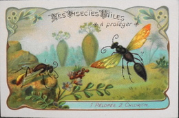 CHROMO & IMAGE - CHROMO Descriptive - Les Insectes Utiles à Protéger - TBE - Non Classificati