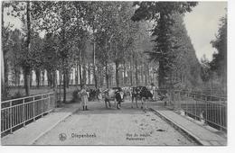 Diepenbeek. Rue Du Moulin - Molenstraat - Diepenbeek