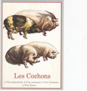 CPM   COCHONS - Schweine