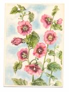 FLORA - MALVE, Künstler-Karte Marianne Schneegans - Heilpflanzen