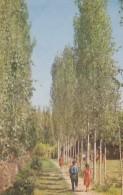 CPA - Geok Chai - Landscape - Azerbaïjan
