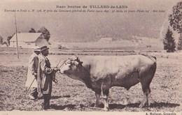 """Carte  - Race Bovine De Villard-de-Lans (38) Taureau """"Jouli"""" 2ème Prix Concours Général De Paris  1923     Ph Mollaret - Villard-de-Lans"""