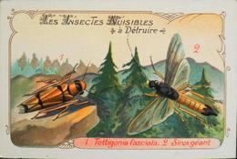 CHROMO & IMAGE - CHROMO Descriptive - Les Insectes Nuisibles à Détruire - En TB. état - Non Classificati