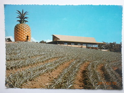 Postcard Sunshine Plantation Nr Nambour Queensland Pineapple Cultivation Farming Interest My Ref B2239 - Cultivation