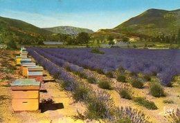 La Provence Pittoresque - Un Rucher Et Son Champ De Lavande - Landwirtschaftl. Anbau