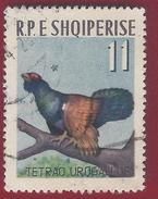 1963 - Orange Tip (Anthocharis Cardamines) -  Yt:AL 650 -  Used - Hühnervögel & Fasanen