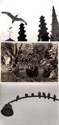 3 Grandes Photos Originales Animaux - Oiseaux - Mouette Bretonne - Coq Et Poules De Basse-cour & Moineaux Sur Réverbère - Personnes Anonymes