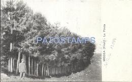 65803 ITALY MEDEA FRIULI THE TREE PINE FOREST POSTAL POSTCARD - Non Classificati