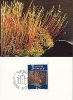 55492- FEATHERMOSS, PLANTS, MAXIMUM CARD, OBLIT FDC, 1981, LIECHTENSTEIN - Plants