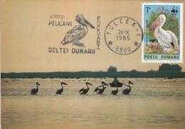55644- PELICANS, BIRDS, MAXIMUM CARD, 1985, ROMANIA