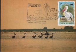 55645- PELICANS, BIRDS, MAXIMUM CARD, 1987, ROMANIA