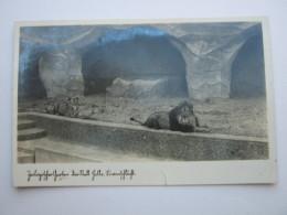 HALLE , Zoo,  Seltene Karte  Um 1941   Mit Marke + Stempel - Halle (Saale)