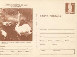 55755- WHITE SWAN, KESTREL, BIRDS, POSTCARD STATIONERY, 1977, ROMANIA