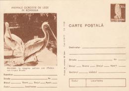 55758- PELICANS, KESTREL, BIRDS, POSTCARD STATIONERY, 1977, ROMANIA