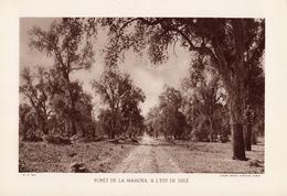 MAROC, FORÊT DE LA MAMORA, A L'EST DE SALé, Planche Densité = 200g, Format 20 X 29 Cm, (Serv. Forestier Maroc) - Géographie