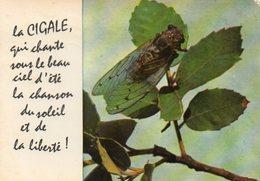 La CIGALE, Qui Chante Sous Le Beau Ciel D'été La Chanson Du Soleil Et De La Liberté! - Insetti