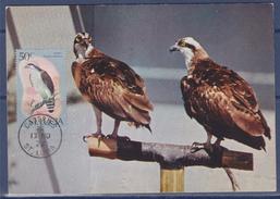 Balbuzards Pêcheurs, Carte Postale Castries 13.11.76 Sainte Lucie Nature, Protection Des Animaux