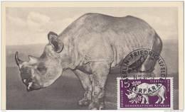 DDR 1956 Max Card With Rhino (Berlin Zoo)