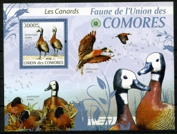 Comores, 2009, Birds, Ducks, Oiseaux, Canards, Fauna, Animals, Wildlife, MNH Sheet, Michel Block 515