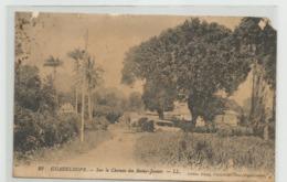 CPA GUADELOUPE Sur Le Chemin Des Bains Jaunes  M35 - Autres