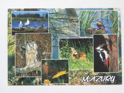 Mazury /  Poland / Birds - Oiseaux