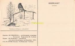 CPA  CENTRALE DE WIELEWAAL BEGIJNENHOF TURNHOUT BRIEFKAART VOGEL OISEAU ROODBORST - Turnhout