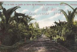 Palestine Rischon Le Zion Près De Jaffa Vue De L'allée Du Jardin Du Baron De Rothschild 1917 Deutsche Marine Schiffspost - Palestina