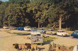 78 - CHATEAU DE THOIRY - La Réserve Africaine - Thoiry