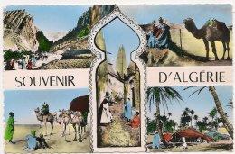 L20F_234 - Souvenir D'Algérie - Carte Multi-vues - Algeria