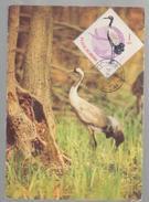 ROMANIA-MAXI CARD BIRDS