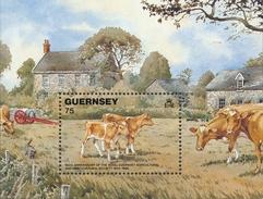 Guernsey Vee - Boerderij
