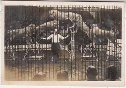 Klant's Dierentuin En Dressuur-School Valkenburg - 1919 - Uitg. Gebr. Simons, Ubach Over Worms - Valkenburg