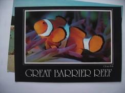 Australië Australia Great Barrier Reef N Q Nice Fish - Australië