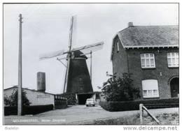 MOLENBEERSEL Bij Kinrooi (Limburg) - Molen/moulin - Oudere Zwart-wit Kaart Van Molen Zorgvliet (1981) - Kinrooi